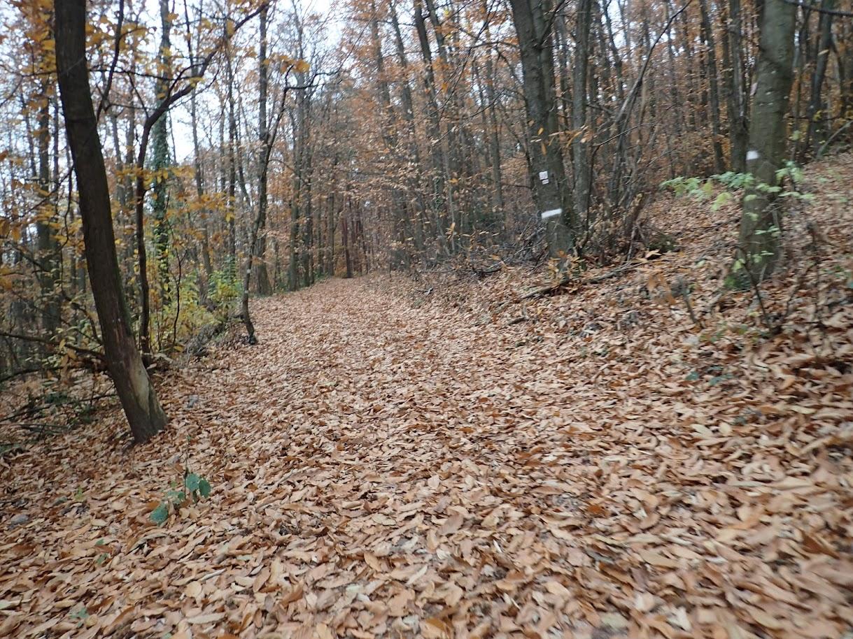 Un tapis de feuilles qui convient fort bien au VTT