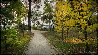 Photo: Artar, Paltin de camp (Acer platanoides) - din Parcul Tineretului - 2016.10.21