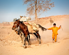 Photo: A boy who is about ten years old tugs on the tail of a horse  running beside another horse in a brick kiln in Peshawar, Pakistan on February 27, 2008. The boy works in the brick,kiln with a fellow boy who can be seen running in the background. Brick kiln owners employ children because they are cheaper than adults.