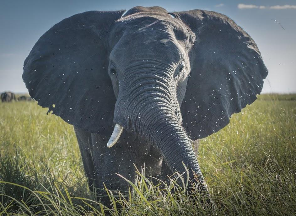 ¿Qué animales puedes ver en un safari por África?