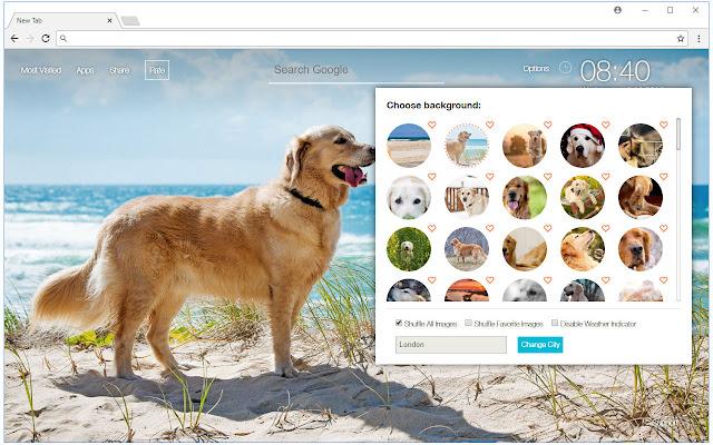 Golden Retriever Dogs Wallpaper Custom NewTab