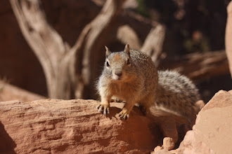 Photo: overly friendly squirrel