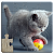 Cats Jigsaw Puzzles Games - For Kids & Adults 😺🧩 file APK for Gaming PC/PS3/PS4 Smart TV