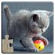 Cats Jigsaw Puzzles Games - For Kids & Adults ? (game)