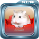 How to Succeed in Cultivating Hamsters APK