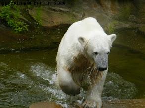 Photo: Und ab ins Wasser ;-)