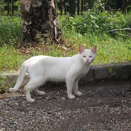 Котка by Georgi Kolev - Animals - Cats Portraits ( треви., слънце., дърво., котка., бял., ден., зелен. )