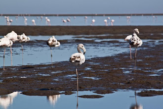 Photo: Flamingoes in Walvis Bay / Plameňáci v zátoce u Walvis Bay