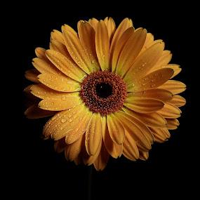 Warm Petals by Esteban Rios - Nature Up Close Flowers - 2011-2013 ( flower studio nature )