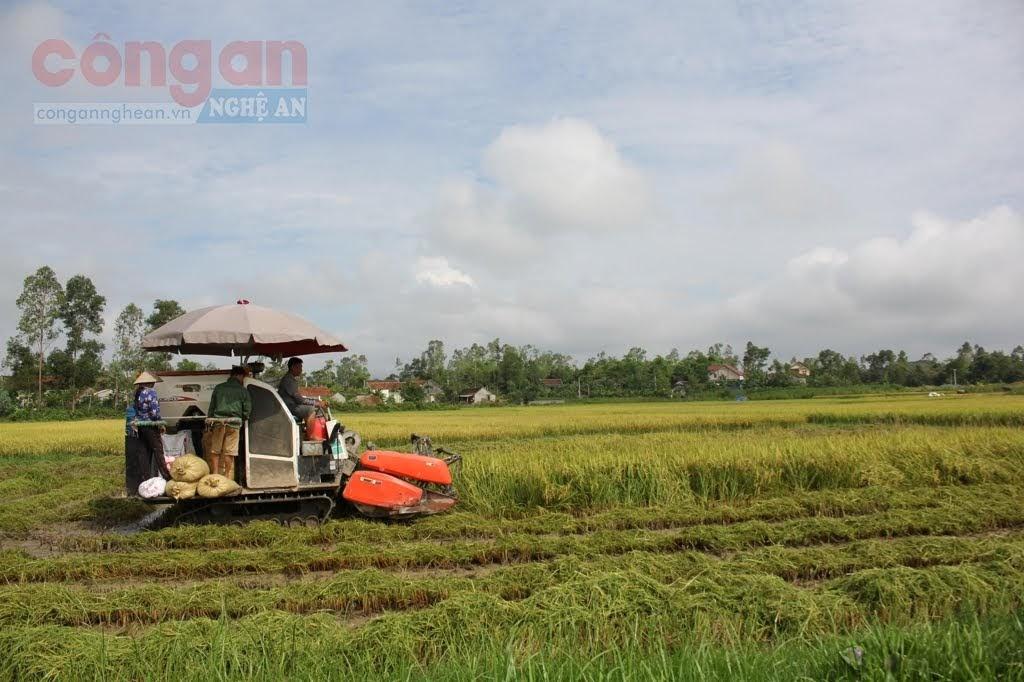 Nghệ An thực hiện nhiều chính sách đảm bảo an ninh lương thực, nâng cao hiệu quả                         sản xuất nông nghiệp