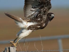 Photo: Attwater Prairie Chicken National Wildlife Refuge