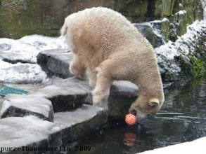 Photo: Knut hat ihn wieder :-)