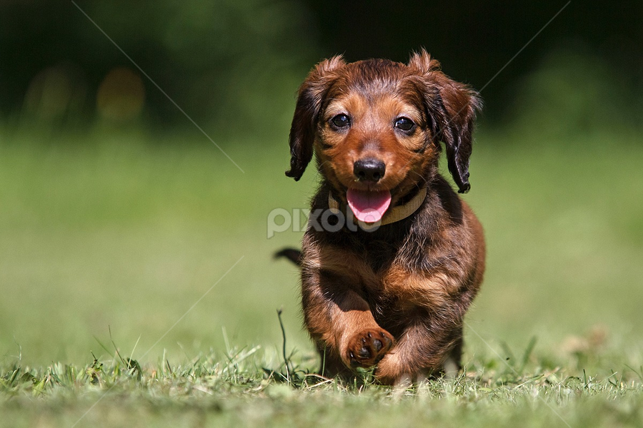 Already I run by Miroslav Socha - Animals - Dogs Puppies