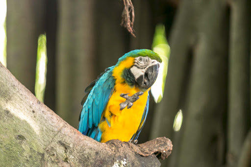 blue-yellow-macaw-in-cartagena.jpg -  A blue and yellow macaw in the cruise terminal in Cartagena, Colombia.