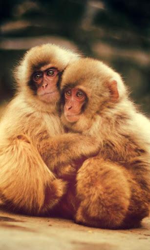 LWP 아기 원숭이