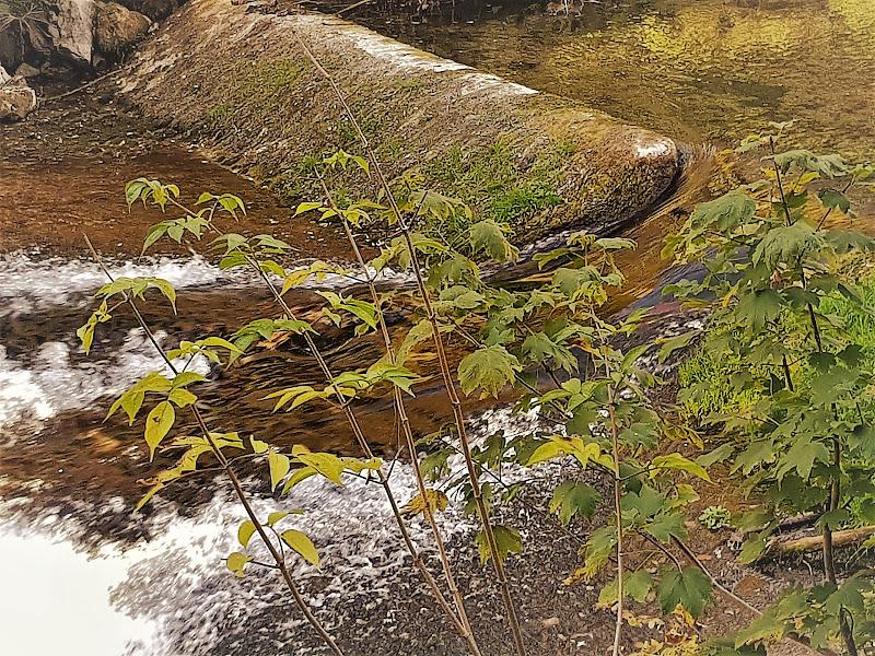 Autunno nel fiume Aniene di Bobp