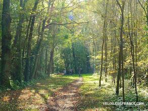Photo: Le bois de Livry - e-guide circuit balade à vélo de Bois le Roi vers Vaux-le-Vicomte par veloiledefrance.com  Cycling in Livry forest -Cycling guide to the Château of Vaux-le-Vicomte by veloiledefrance.com