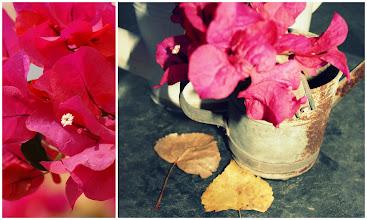 Photo: Autumn from my garden