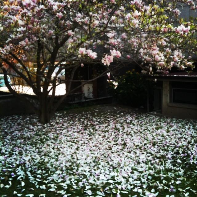 bianca primavera di simotuttergreen