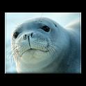 Seal-N-Danger icon