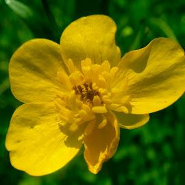 by Vladymyr Sergeev - Flowers Flowers in the Wild