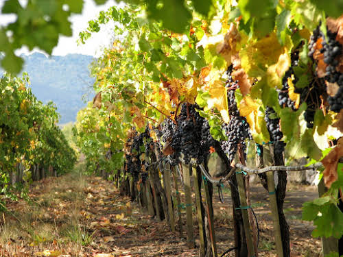 What to Do in Northern California: Attractions & Travel Guide // Napa and Sonoma Valley Vineyards