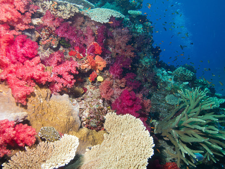 Great White Wall, Taveuni Fiji (25 Best Dive Sites in the World to Put on Your Bucket List).