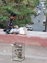 Photo: Phnom Penh, Wat Phnom - Vögel zum Verkauf um durch die Freilassung das eigene Karma zu bessern und als Geschäftsidee für die Verkäufer (schlechtes Karma)