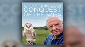 David Attenborough's Conquest of the Skies thumbnail
