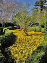Photo: Garden in Front of Mansion