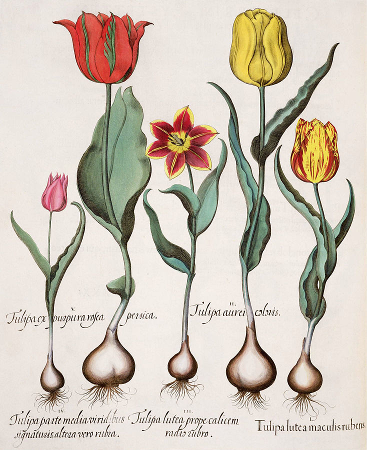 Тюльпаномания в Голландии