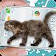 Cat Walks in Phone Cute Joke Download for PC Windows 10/8/7