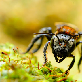 facing by Asrul CikguOwn - Animals Insects & Spiders