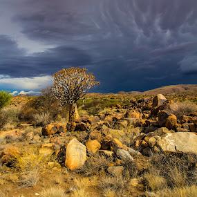 Quiver  by Theuns de Bruin - Landscapes Deserts