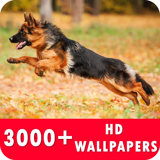 German Shepherd Live Wallpapers HD