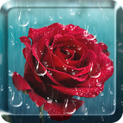 Rose raindrop live wallpaper apps on google play rose raindrop live wallpaper altavistaventures