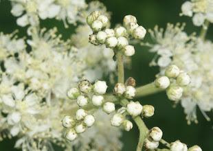 Photo: #floralfriday by +Tamara Pruessner  Siberian wildflowers :)