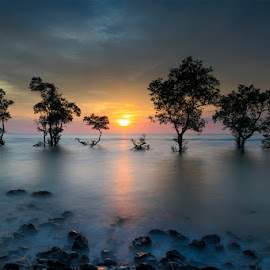 The Trees by Mac Evanz - Landscapes Sunsets & Sunrises