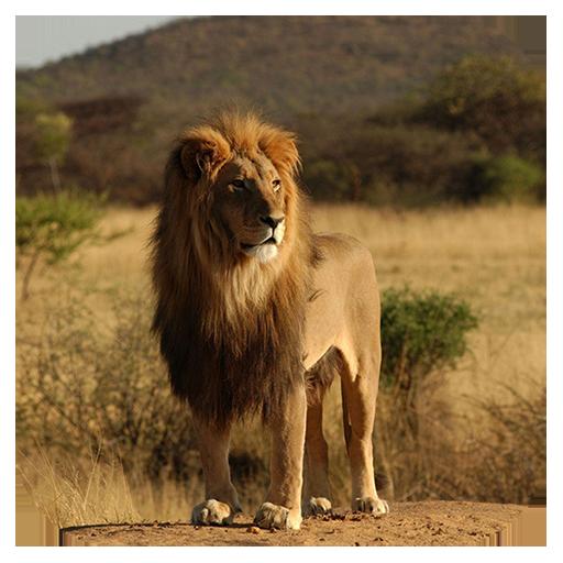 休闲の野生動物のジグソーパズル LOGO-記事Game