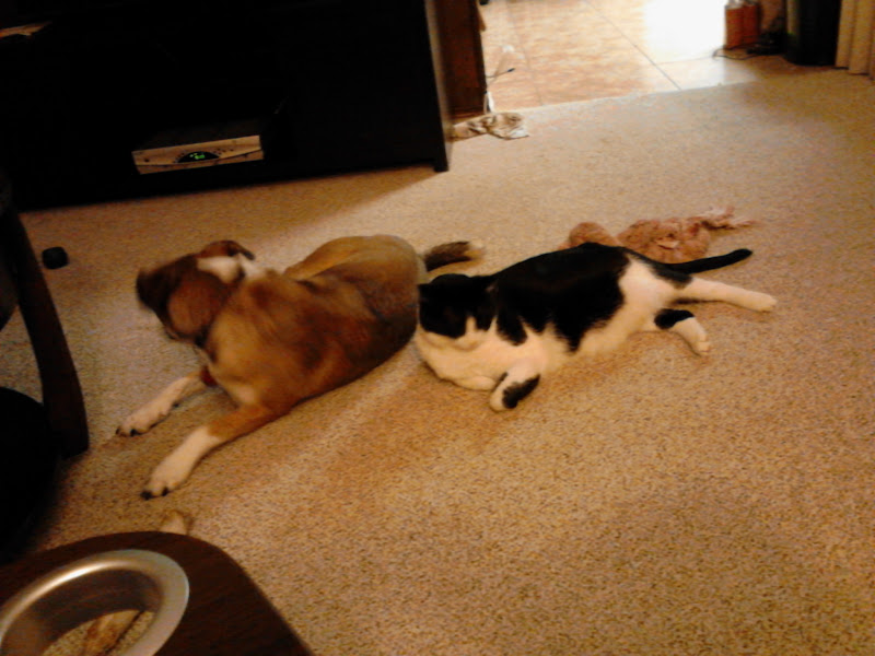 Photo: Brandy and Mister chilling at our new home.
