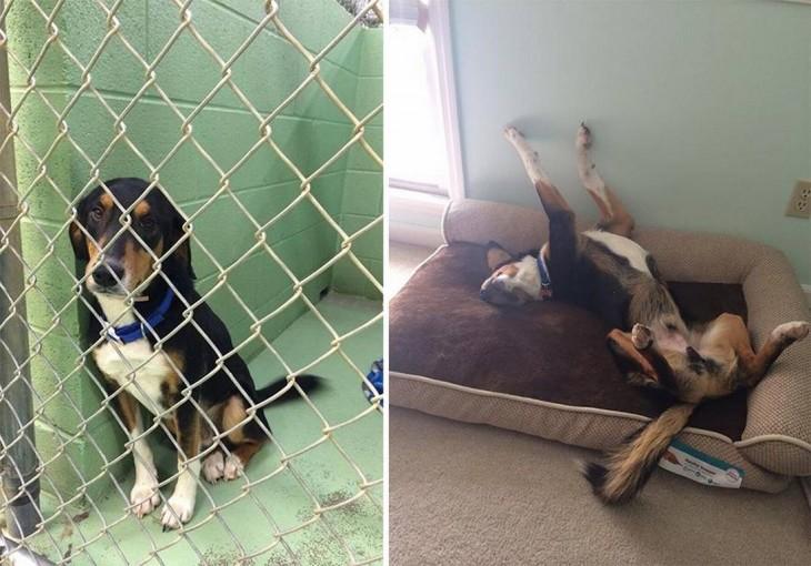 Transformación de perros adoptados (14)