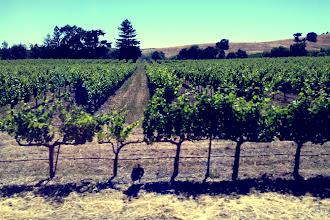 Photo: Beautiful wine country