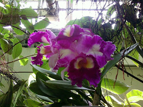 Photo: I never understood what the big deal was about orchids. Now I do. The ones in the botanical garden were amazing. My cell phone camera (I forgot to bring a better one) doesn't do justice to these...