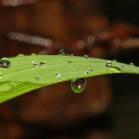 Morning Dews by Edwin Yepese - Nature Up Close Flowers - 2011-2013 ( macro )
