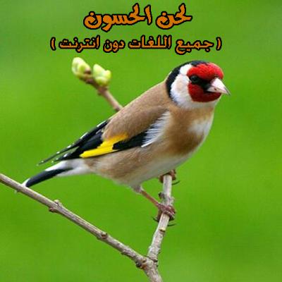 لحن الحسون(جميع اللغات دون نت) - screenshot
