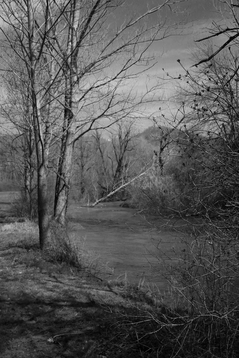 Il bosco e il suo mistero di Fabiana29