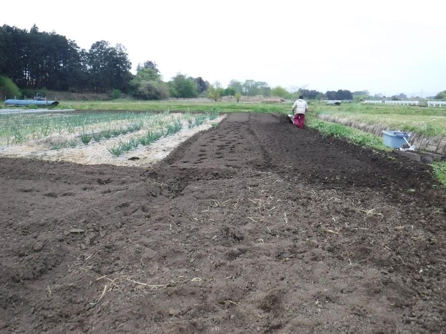 マメトラのリターンカルチをネギの土寄せ用の刃に変えて明渠を掘る
