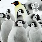 cute penguin live wallpaper icon