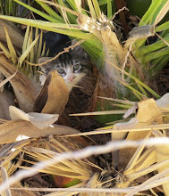 Photo: Kätzchen in der Palme (Felix)
