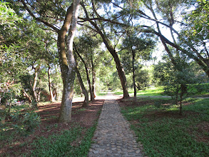 Photo: a path on the campus at Tunghai University